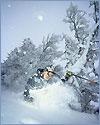 Sol, regn, snö och massor av skidor…
