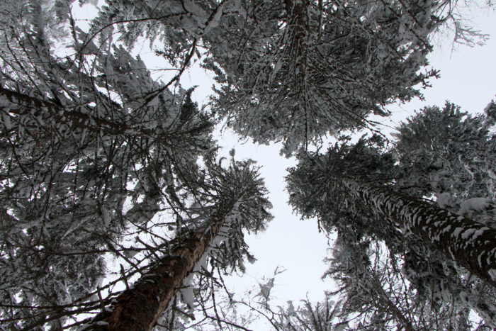 En titt på ovan från den Bulgariska skogen.