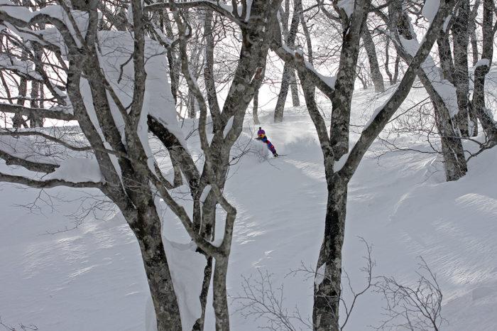 Alla japanska skidorter har dock tillgång skogsåkning av högsta kvalitet