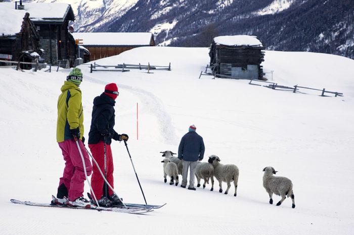 Folk vallfärdar till Zermatt