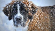Hunden som sålts i mer än 500 000 exemplar