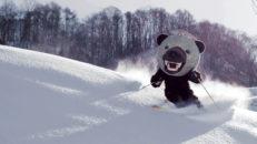 Melonbjörnen på Hokkaido