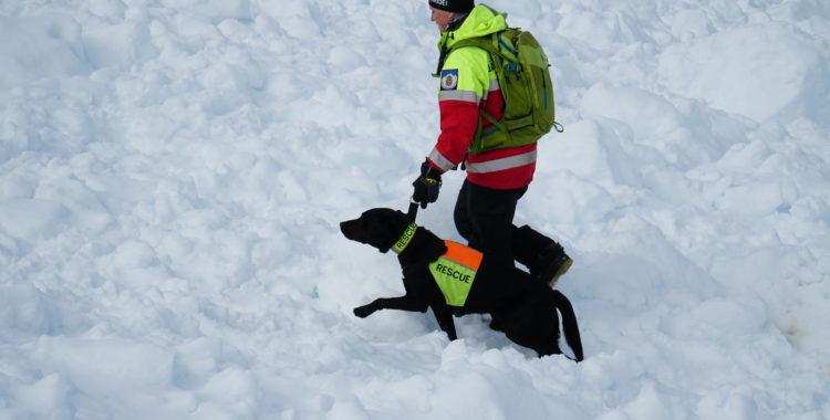 Bilden är ej från olyckan.  Skidåkaren i Jaun, Schweiz räddades med RECCO-sökare och lavinhund.