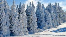 Snöläget i Sverige inför sportloven