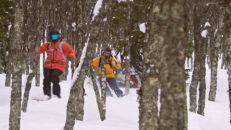 Bli bättre på att åka puder i skogen