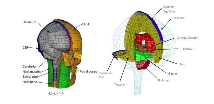 Datormodell över hjärnans uppbyggnad