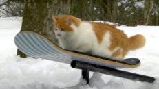 Kattvideo deluxe: den här missen kan åka snowskate